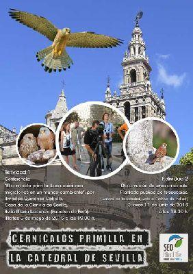 Observación de cernícalos primilla en la Catedral de Sevilla