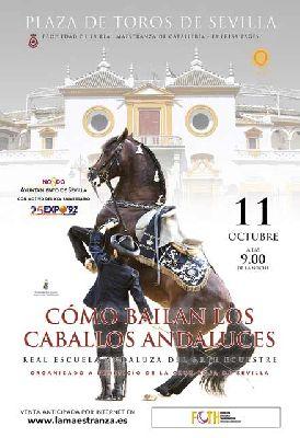 Cómo bailan los caballos andaluces en la Plaza de la Maestranza de Sevilla