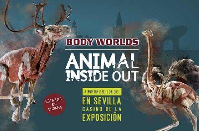 Exposición: Animal Inside Out en el Casino de la Exposición de Sevilla