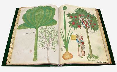 Imagen de la exposición Plantas y flores curativas en los códices iluminados en el Alcázar de Sevilla