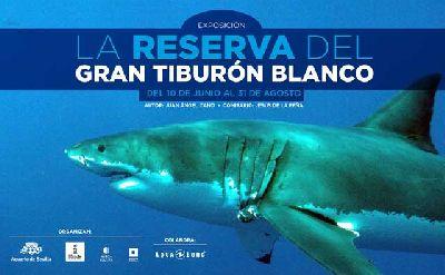 Exposición: La reserva del gran tiburón blanco en Acuario de Sevilla