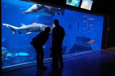 Foto promocional de la actividad Tiburones a media noche